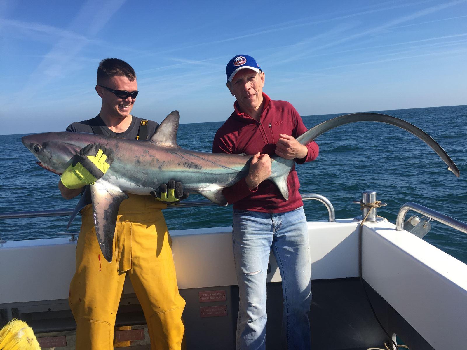 100lb thresher shark II